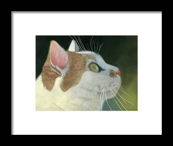 Cat Framed Print featuring the pastel Cat Portrait Pastel Painting by Dave Nevue