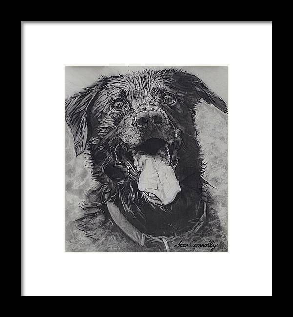 Charcoal Pencil Framed Print featuring the drawing Charlie Dog by Sean Connolly