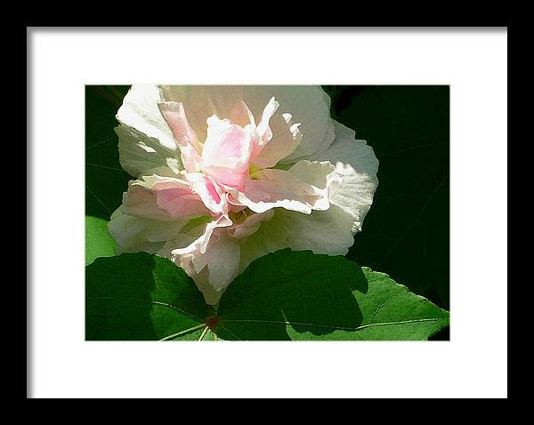China Rose Framed Print featuring the photograph China Rose 1 by James Temple