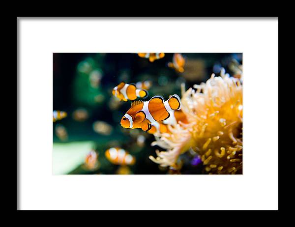 Underwater Framed Print featuring the photograph Clownfish by RapidEye