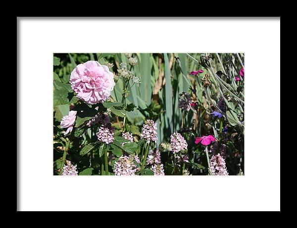 Cottage Garden Framed Print featuring the photograph Cottage Garden by Vicki Cridland