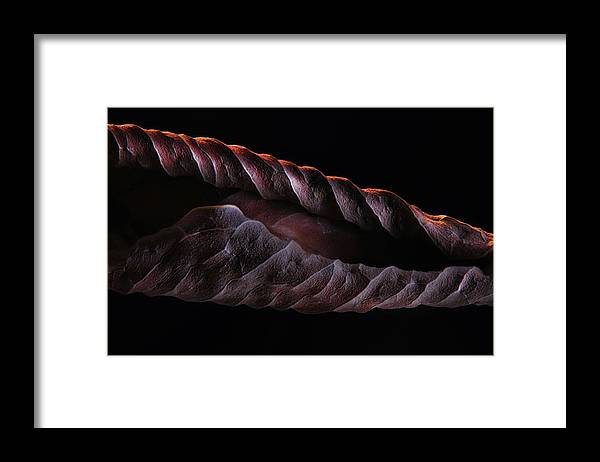 Leaf Framed Print featuring the photograph Dead Leaf Project 1 by Jim Painter