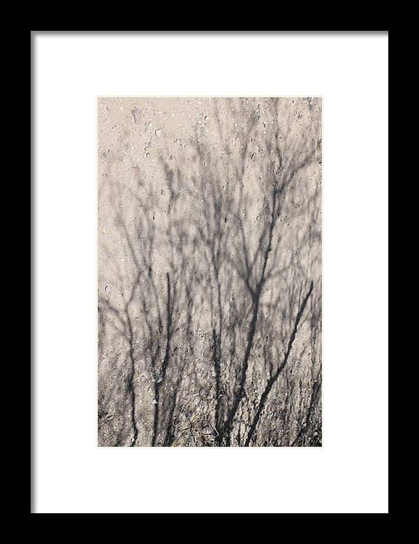 Photograph Framed Print featuring the photograph Desert Forest by Richard Wetterauer
