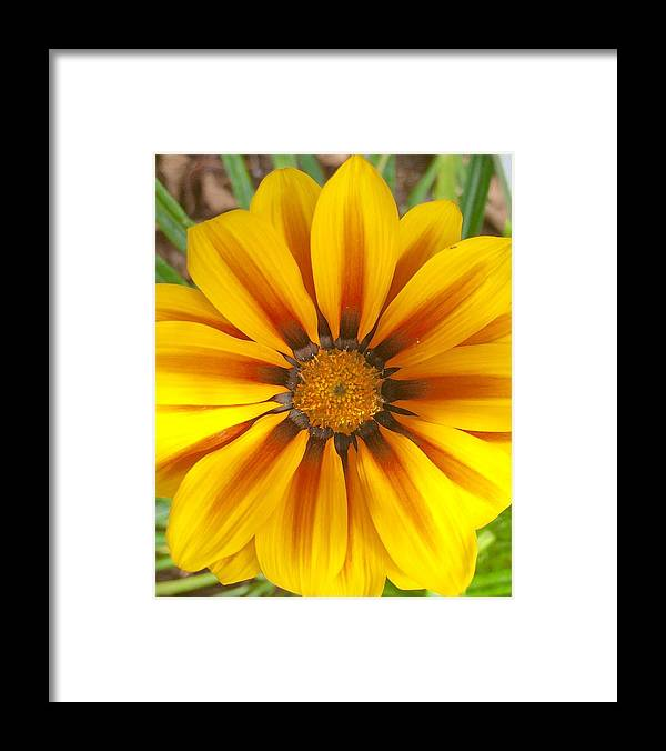 Color Image Framed Print featuring the photograph Divine Nature by Heidi Coppock-Beard