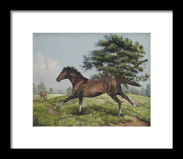Horse In Field Framed Print featuring the painting Energy To Burn by Wanda Dansereau