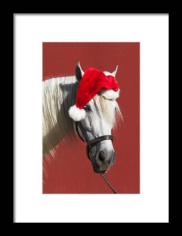 Horse Framed Print featuring the photograph Equine Santa Horse Funny Clause Red Christmas by 66North