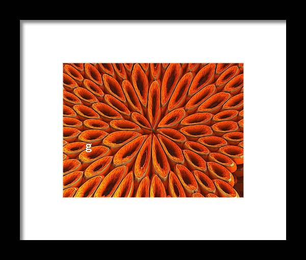 Framed Print featuring the photograph Face Mask Orange by Getty Images