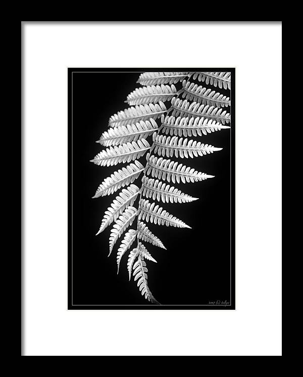 Australia; Floral Framed Print featuring the photograph Fern Dance by Holly Kempe