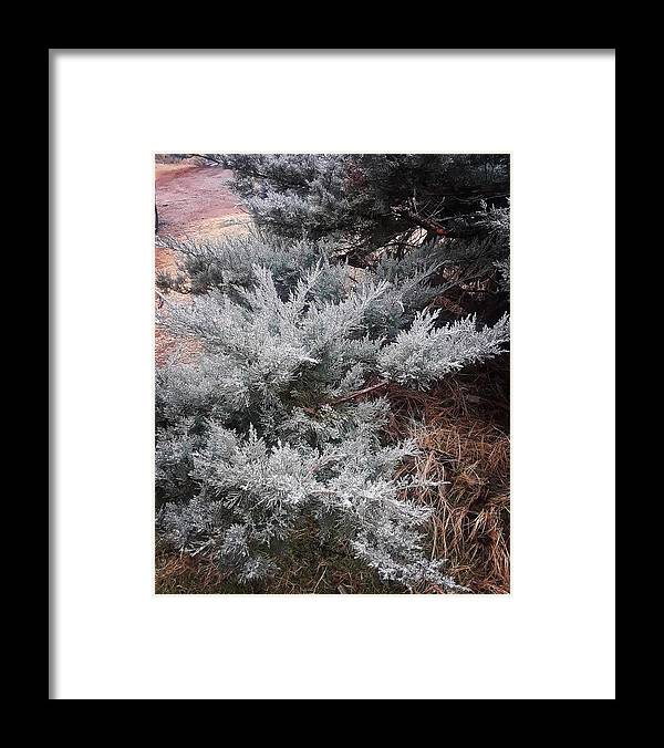 Scenery Framed Print featuring the photograph First Frost by Ariana Torralba