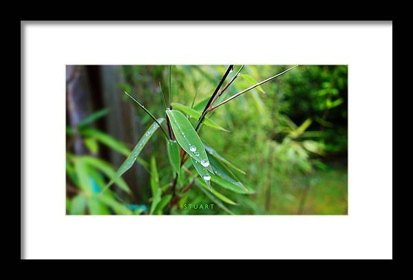 Shades Of Green Framed Print featuring the painting Forty Shades Of Green by Charles Stuart