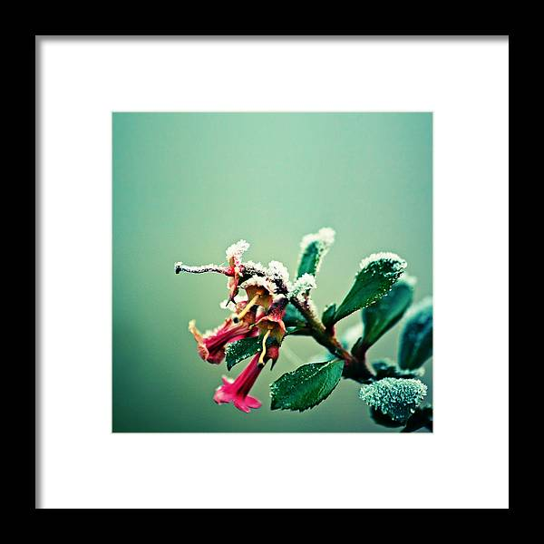 Snow Framed Print featuring the photograph Frosty urban acid trumpet bokeh by s0ulsurfing - Jason Swain