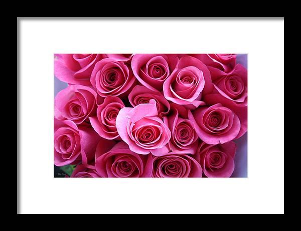 Pink Roses Framed Print featuring the photograph Grandma Roses by Linda Sannuti