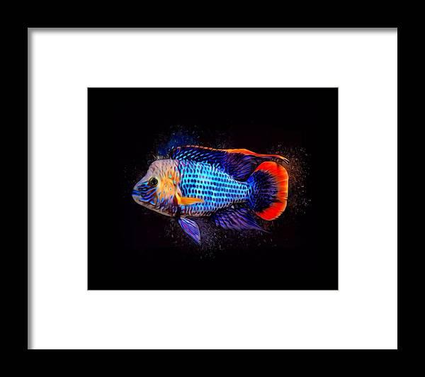Green Terror Framed Print featuring the digital art Green Terror Cichlid Fish by Scott Wallace Digital Designs