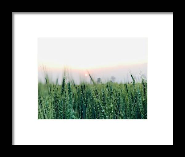 Lanscape Framed Print featuring the photograph Greenery by Prashant Dalal