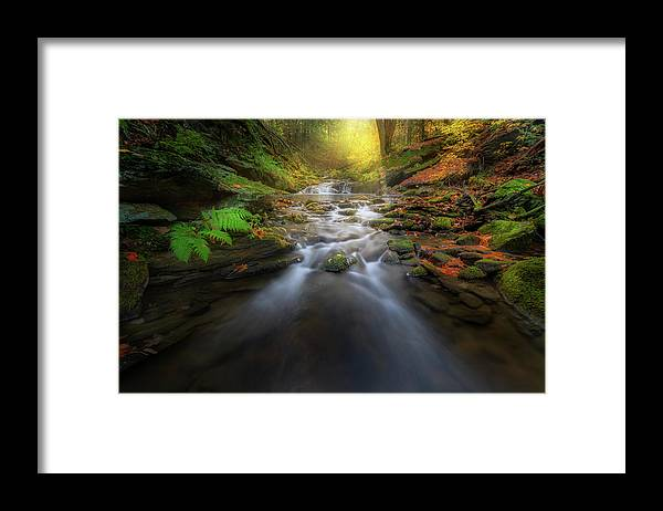New England Fall Foliage Framed Print featuring the photograph In the Light by Bill Wakeley