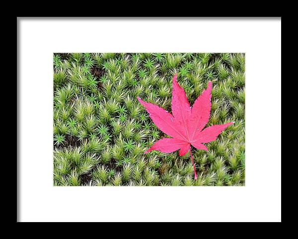 Grass Framed Print featuring the photograph Koyo in Arashiyama, Kyoto by Daniel Chui