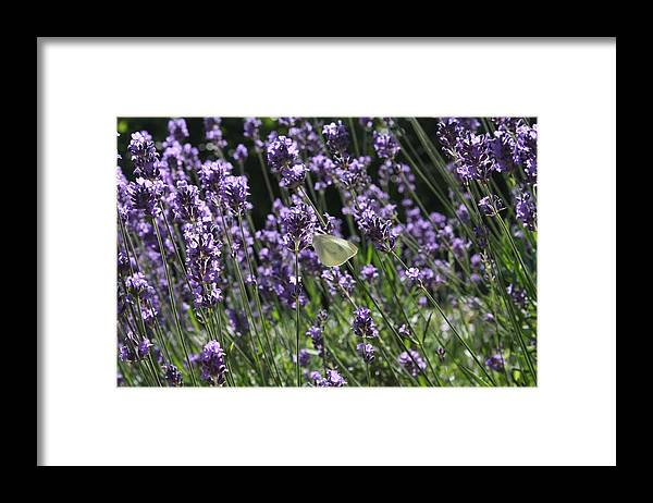 Lavender Framed Print featuring the photograph Lavender by Vicki Cridland