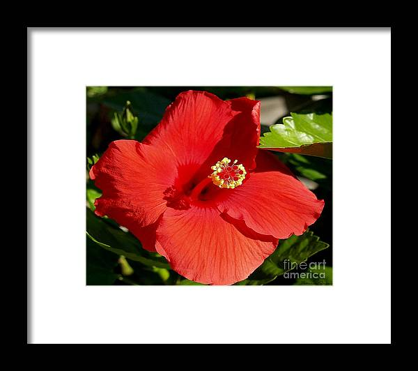 Fine Art Photography Framed Print featuring the photograph Leila by Patricia Griffin Brett