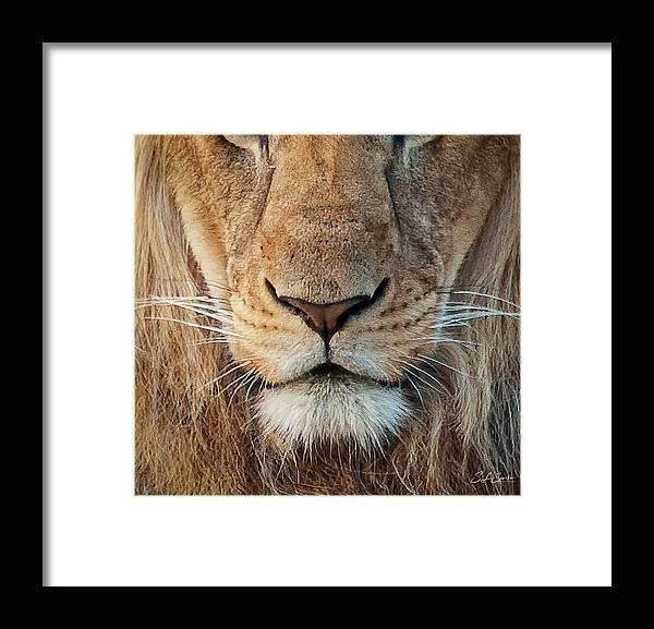 Lion Framed Print featuring the photograph Lion by Steven Sparks