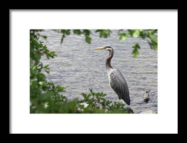 Looking Upon Heron  by Sarah Joy