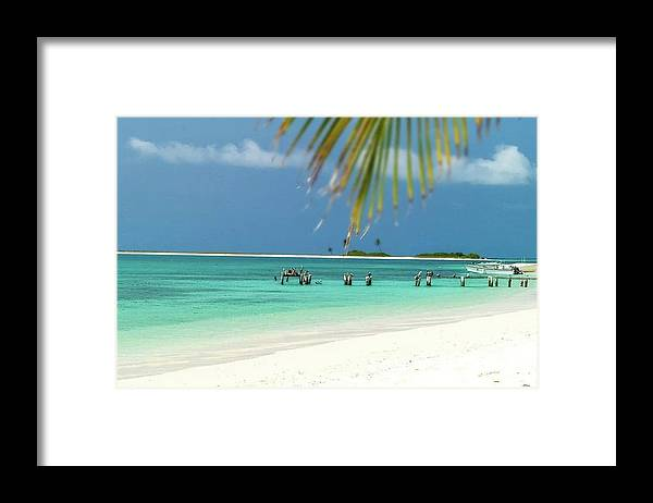 Framed Print featuring the photograph Palm Beach Los Roques Venezuela by Organizacion Bluewater