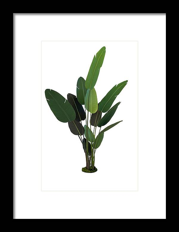 Tropical Tree Framed Print featuring the photograph Palm Leaves by Liyao Xie