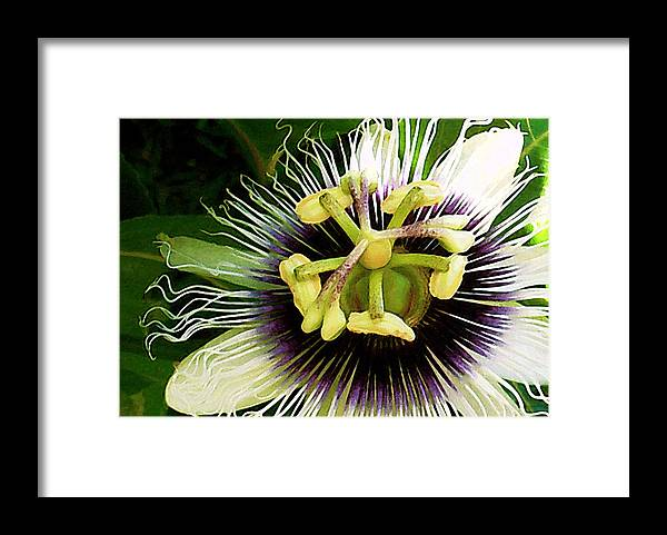 Hawaii Framed Print featuring the photograph Passion Fruit Flower by James Temple