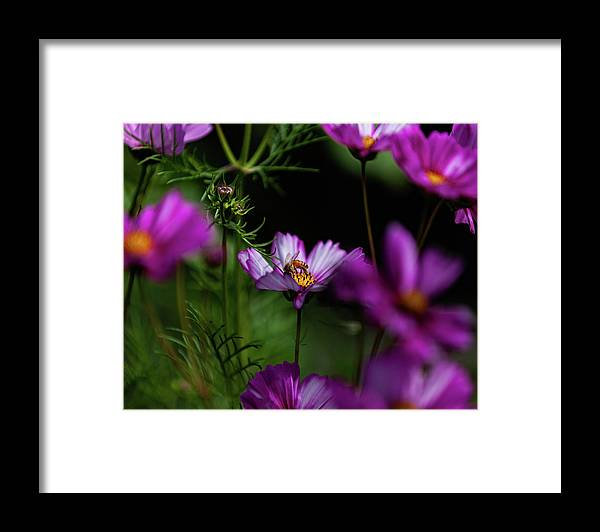 Pink Framed Print featuring the photograph Pink flower visit by John Heywood
