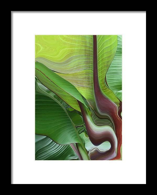 Plant Framed Print featuring the photograph Plantflow by Linda Sannuti