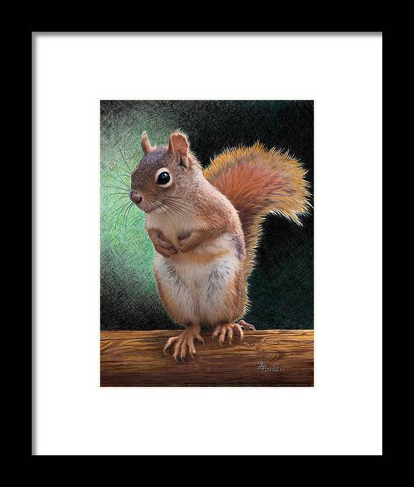 Squirrel Framed Print featuring the drawing Please by Brent Ander