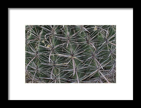 Photograph Framed Print featuring the photograph Prickly by Richard Wetterauer