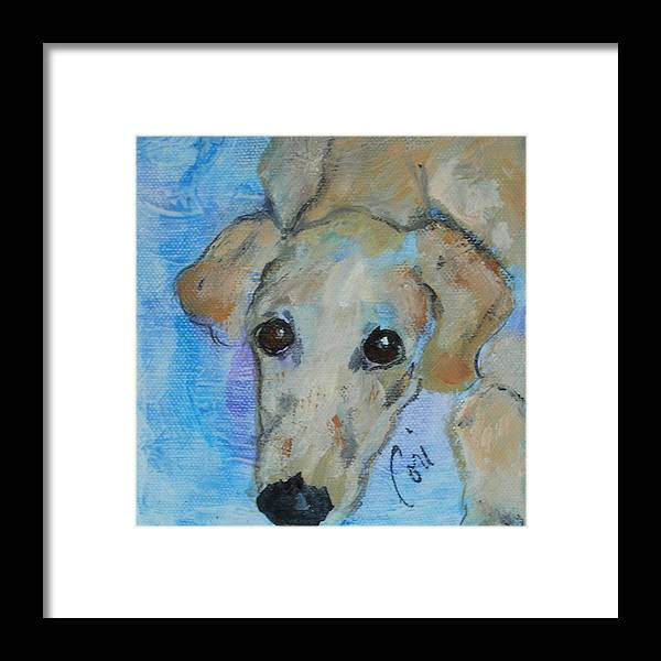 Acrylic Framed Print featuring the drawing Pupster by Cori Solomon