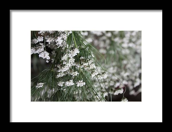 Queen Anne's Lace Framed Print featuring the photograph Queen Anne's Lace by Vicki Cridland