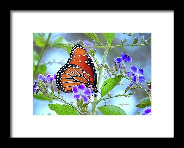 Queen Butterfly on Duranta by Nancy Denmark