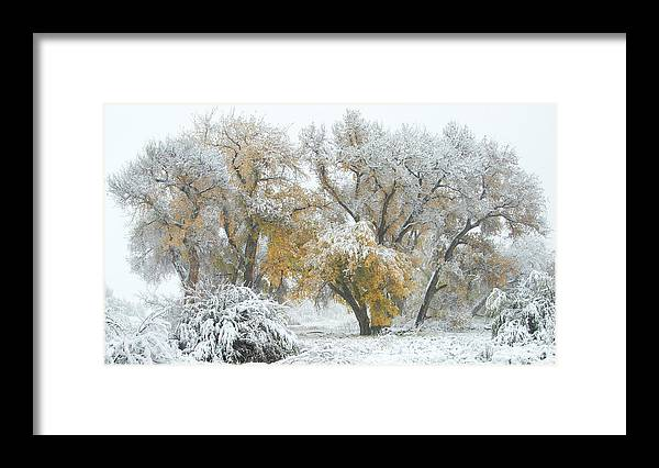 Winter Framed Print featuring the photograph Quite Winter Beauty by Zayne Diamond Photographic