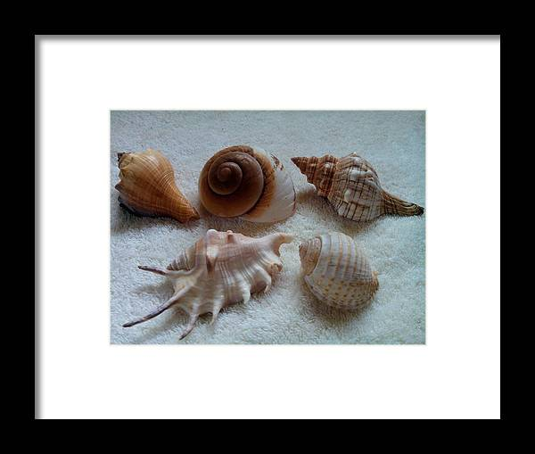 Shell Framed Print featuring the photograph Seashell Quintet - Color by Barista Uno