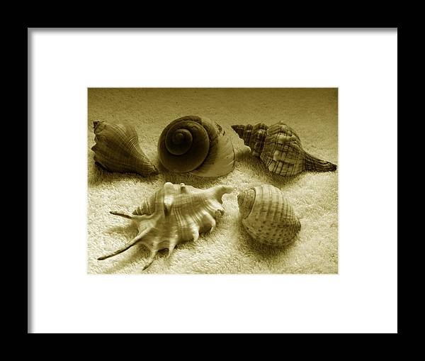 Photograph Framed Print featuring the photograph Seashell Quintet - Sepia by Barista Uno