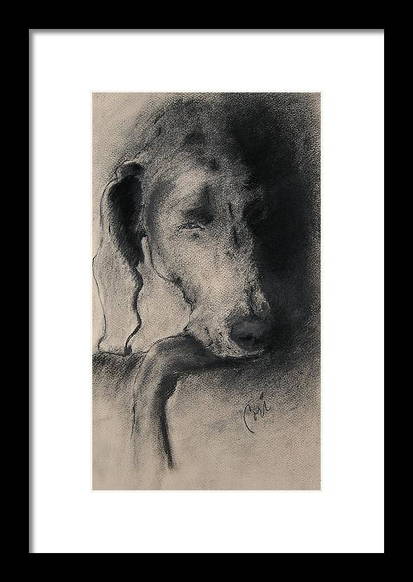 Weimaraner Framed Print featuring the drawing Silhouette by Cori Solomon