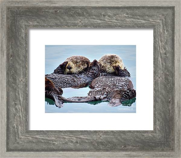 Southern sea otters 0112-16 by Linda Dron Photography