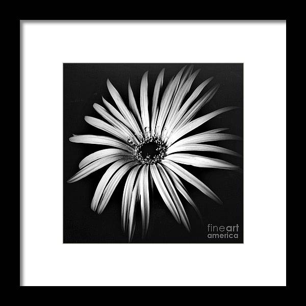 Photo Framed Print featuring the photograph Star by Alex Caminker