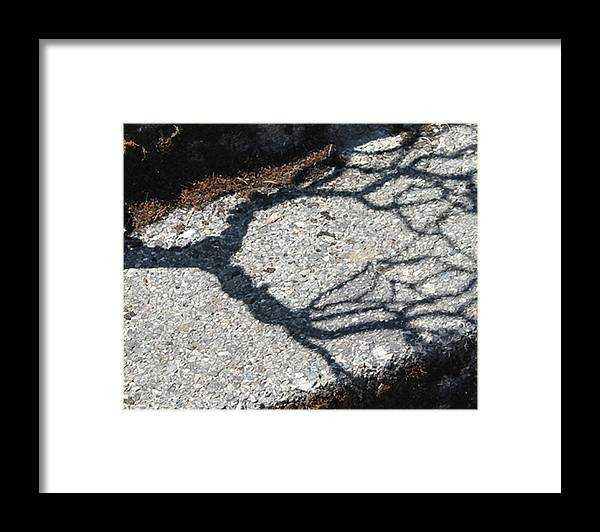 Photograph Framed Print featuring the photograph Taking Root by Richard Wetterauer