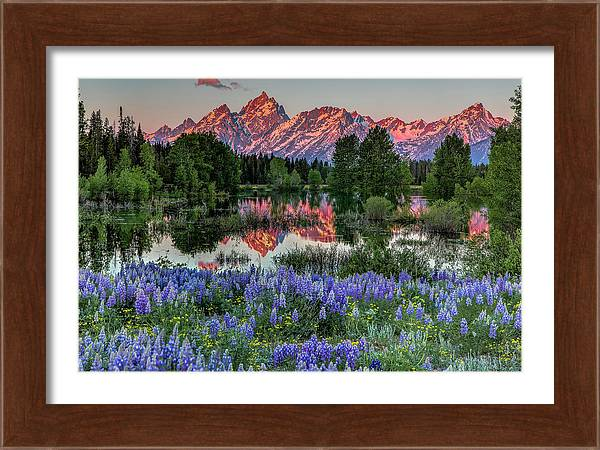 Tetons and Lupines by Christian Rogers