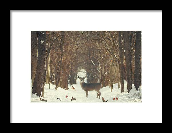 Snow Framed Print featuring the photograph The Forest of Snow White by Carrie Ann Grippo-Pike