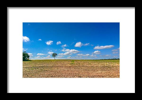 Scenics Framed Print featuring the photograph The loneliness of the tree in the middle of the soy plantation in the rural area of Piracicaba. by CRMacedonio