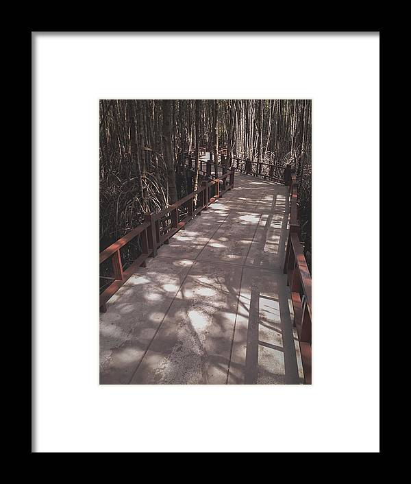 Tropical Rainforest Framed Print featuring the photograph The way in Mangrove forest, Thailand by Natthapol Bussai