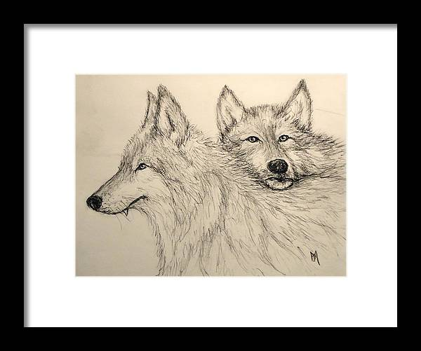 Wolves Framed Print featuring the drawing Timberwolf by Pete Maier