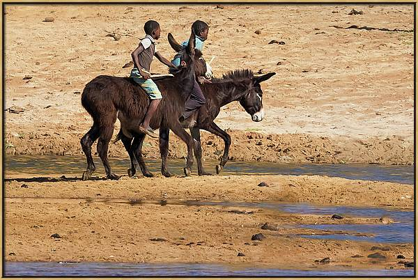 Two Boys Riding Donkeys Along the River in Angola by Belinda Greb
