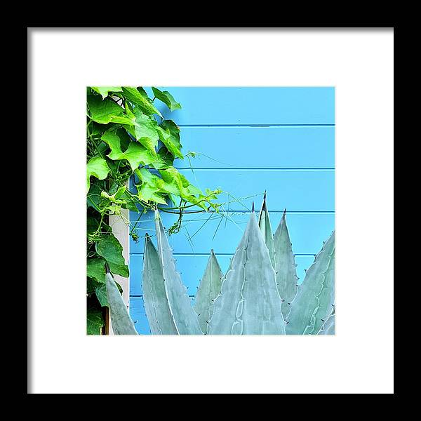 Framed Print featuring the photograph Two Plants by Julie Gebhardt