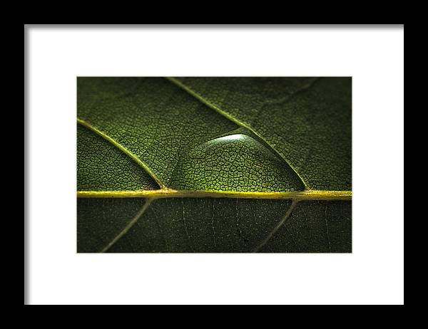Environmental Conservation Framed Print featuring the photograph Water drop on leaf by MirageC