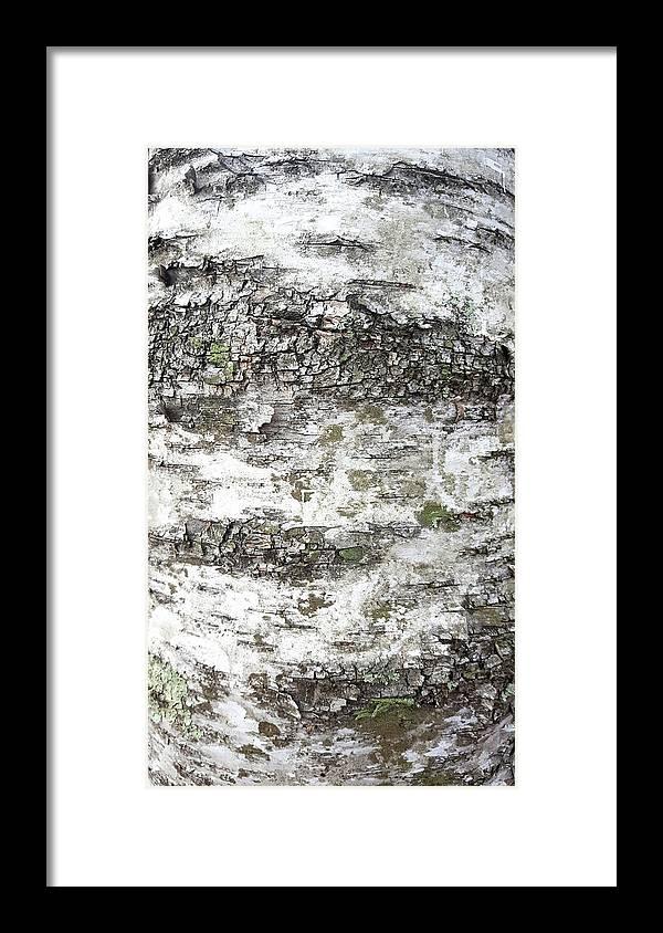 White Birch Bark Framed Print featuring the photograph White Birch Bark by Trevor Slauenwhite
